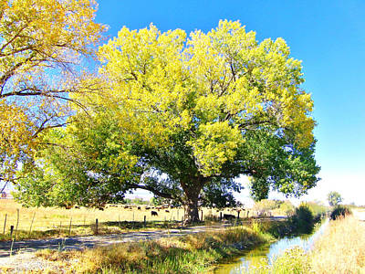 Photograph - Cottonwood Colors by Marilyn Diaz
