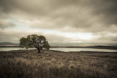 Photograph - Cottonwood In October by Alexander Kunz
