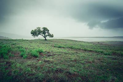 Photograph - Cottonwood In October Storm by Alexander Kunz