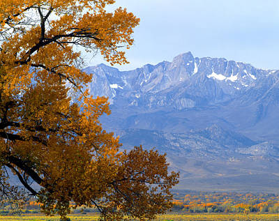 Photograph - 2a6754-cottonwood In Owens Valley Autumn  by Ed  Cooper Photography