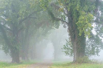 Photograph - Cottonwood Lane by Robert Potts