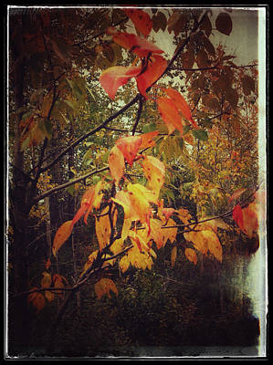 Photograph - Cottonwood Leaves by Fred Denner