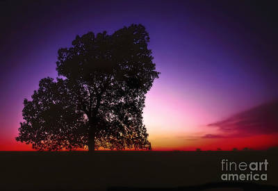 Photograph - Cottonwood On The Prairie At Sunset by Walt Foegelle