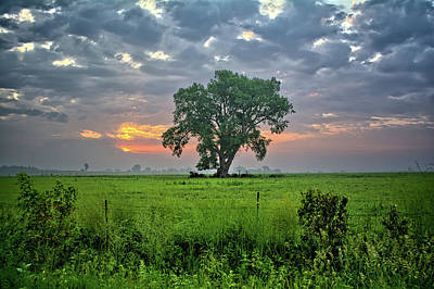 Photograph - Cottonwood Pasture by Bonfire Photography