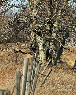 Photograph - Cottonwood Stand by Ann E Robson