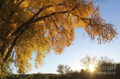 Photograph - Cottonwood Sunset by Suzanne Oesterling