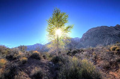 Photograph - Cottonwood Sunstar by Scott Harris