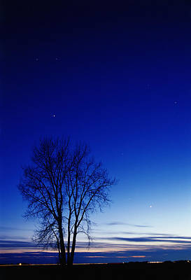Without People Photograph - Cottonwood Tree At Night, Dugald by Mike Grandmailson