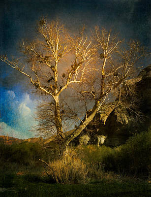 Photograph - Cottonwood Tree by Sandra Selle Rodriguez