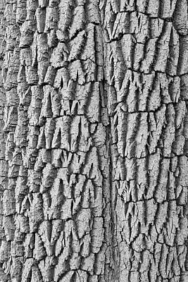 Photograph - Cottonwood Tree Texture Black And White Print by James BO Insogna
