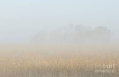 Cottonwood Trees In Fog Art Print by Fred Lassmann