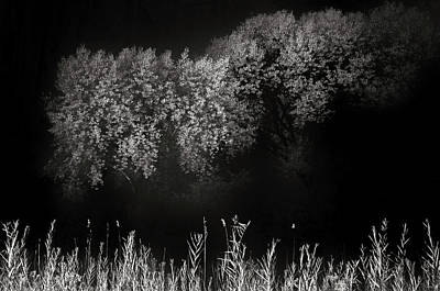 Capitol Reef Photograph - Cottonwoods And Grasses by Joseph Smith