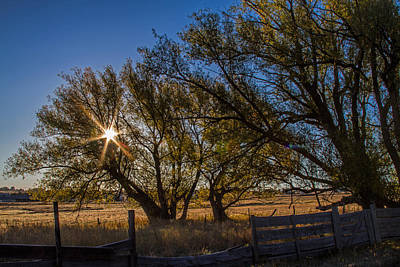 Photograph - Cottonwoods Embrace The Sun by Alana Thrower