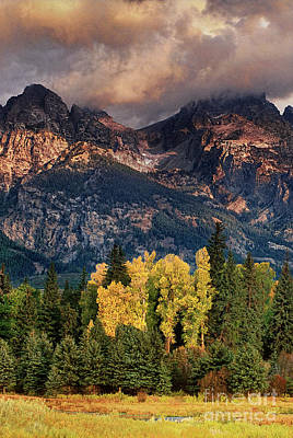 Photograph - Cottonwoods Fir Trees Fall Color Grand Tetons Nat by Dave Welling