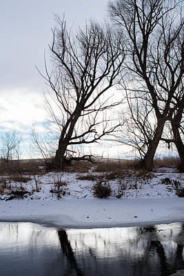 Photograph - Cottonwoods In Silhouette by Brian Stricker
