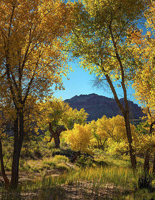 Capitol Reef Photograph - Cottonwoods by Joseph Smith