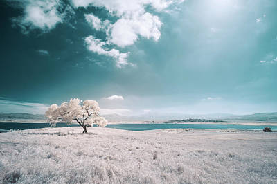 Photograph - Cottowood Tree Infrared by Alexander Kunz