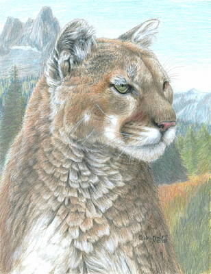 Drawing - Cougar 2 by Carla Kurt