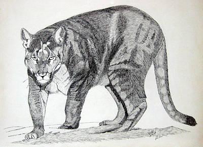 Cougar Art Print by Daniel Shuford