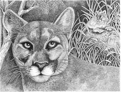 Drawing - Cougar by Lawrence Tripoli