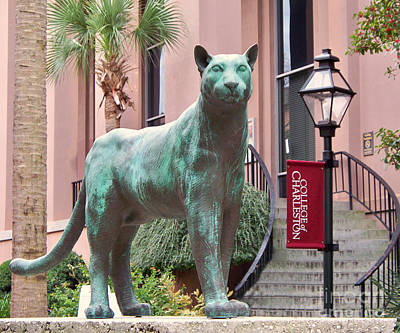 College Of Charleston Photograph - Cougar by Melanie Snipes