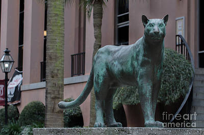 Photograph - Cougar On The Grounds by Dale Powell
