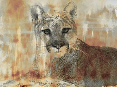 Photograph - Cougar Portrait by Steve McKinzie