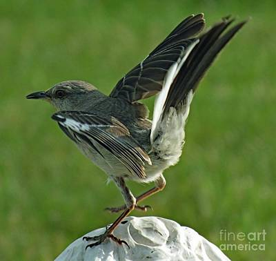 Hollywood Style - Oh Play Me Some Country Music - Northern Mockingbird by Cindy Treger