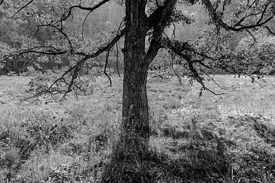 Coulee Oak Art Print