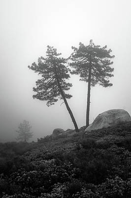 Photograph - Coulter Pines In Fog by Alexander Kunz