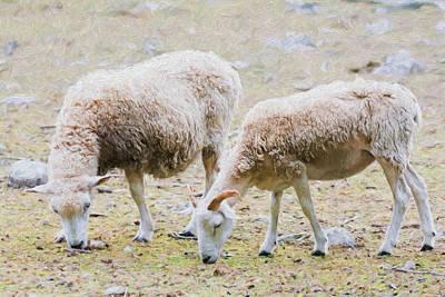Barnyard Digital Art - Counting Sheep by Black Brook Photography