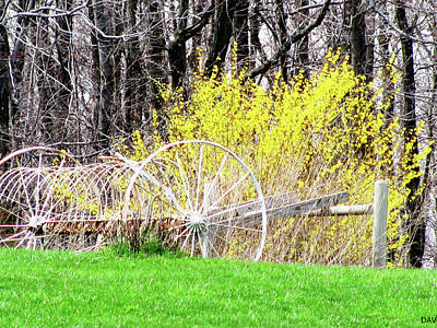 Natures Work Beautify Photograph - Countrified Spring by Debra     Vatalaro