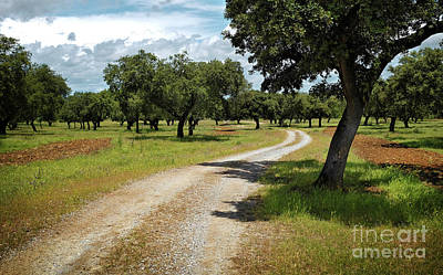 Trekking Photograph - Countriside Trail by Carlos Caetano