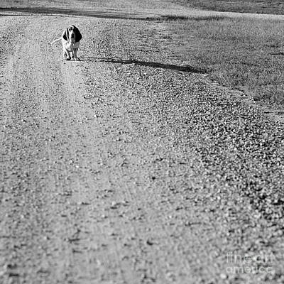 Photograph - Country Basset Hound by Patrick M Lynch