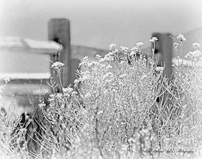 Photograph - Country  by Bobbee Rickard