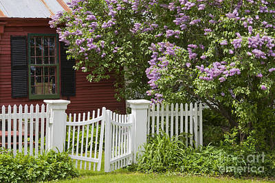 Photograph - Country Cottage Lilac Bloom by Alan L Graham