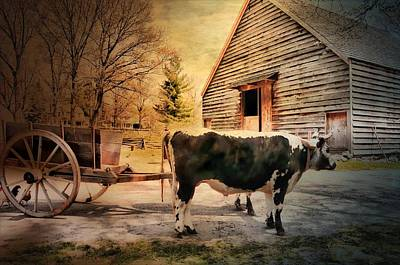 Photograph - Country Cow by Diana Angstadt