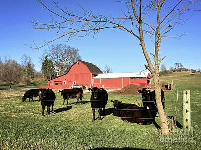 Photograph - Country Cows by Laura Kinker