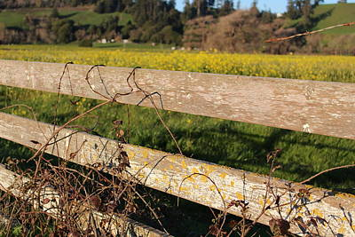 Photograph - Country Fence 2 by Lucie Buchert