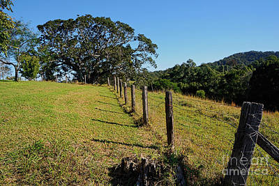Photograph - Country Fence And Old Fig Tree By Kaye Menner by Kaye Menner