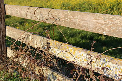 Photograph - Country Fence by Lucie Buchert