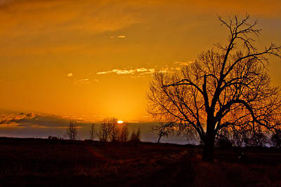 Tree Photograph - Country Golden Sunrise by James BO  Insogna
