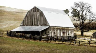Mistletoe - Country Homestead by Athena Mckinzie