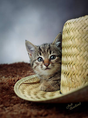 Photograph - Country Kitten by Judi Quelland
