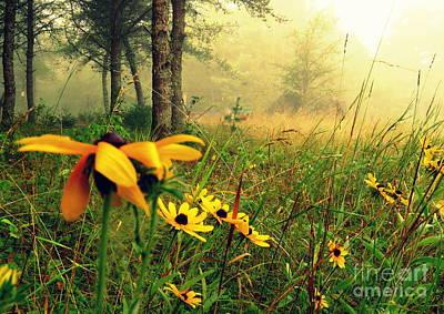 Photograph - Country Landscape by France Laliberte