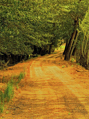 Photograph - Country Lane by David King