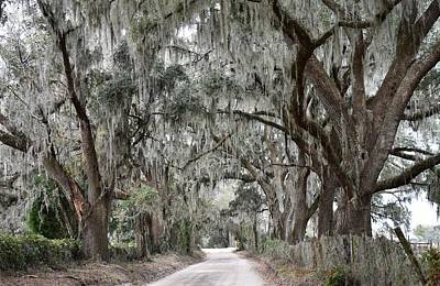 Photograph - Country Lane Of Live Oak Trees by rd Erickson