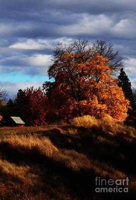 Photograph - Country Life by Greg Patzer