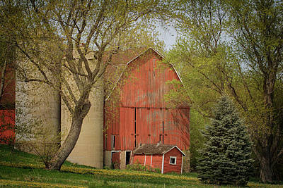 Photograph - Country Life by Susan Rissi Tregoning