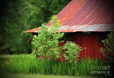Country Living Print by Karry Degruise